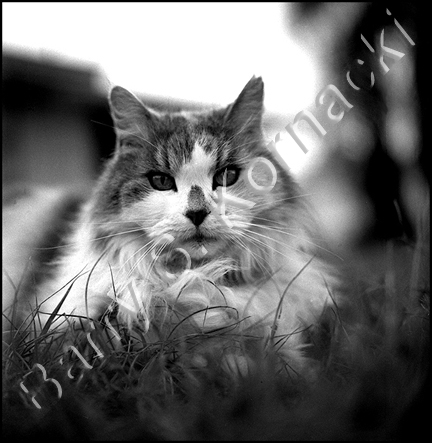 black and white pictures of animals. Prissy, lack and white